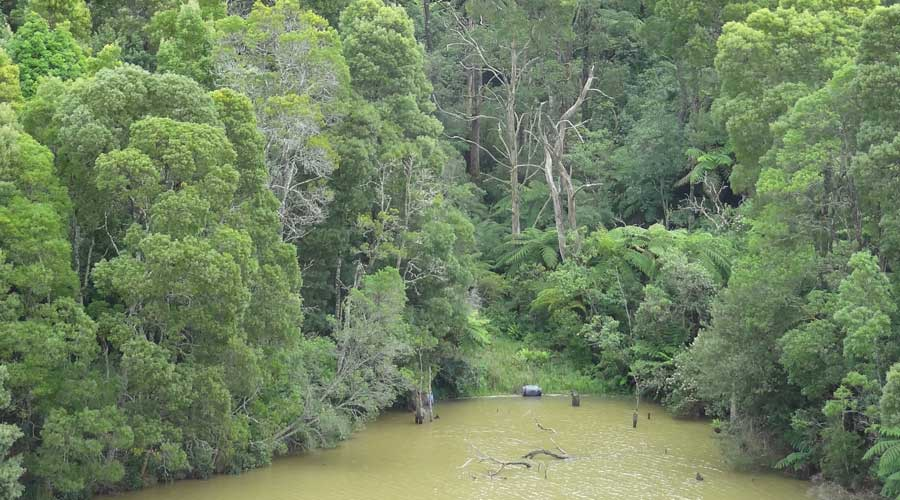 A view of the rainforest
