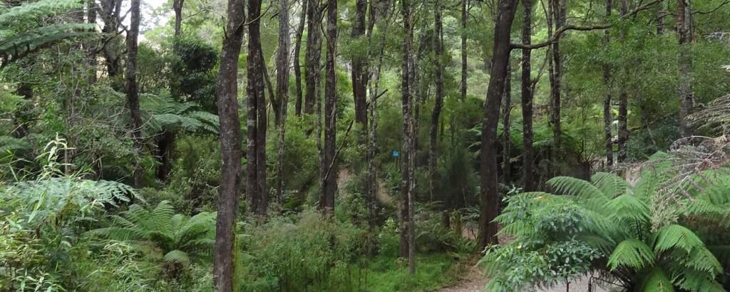 Camp Rumbug rainforest scenery near Wilson's Promontory