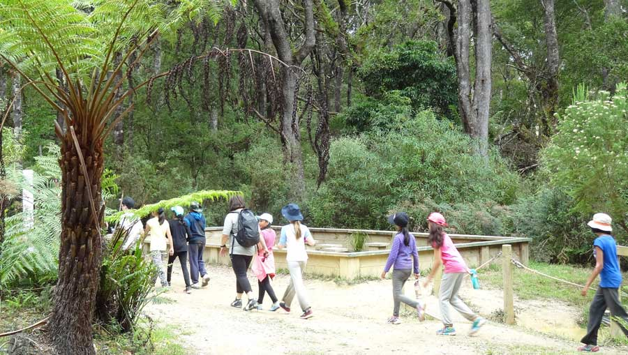 Walk at Camp Rumbug