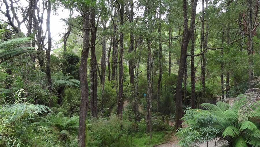 Camp Rumbug's rainforest setting